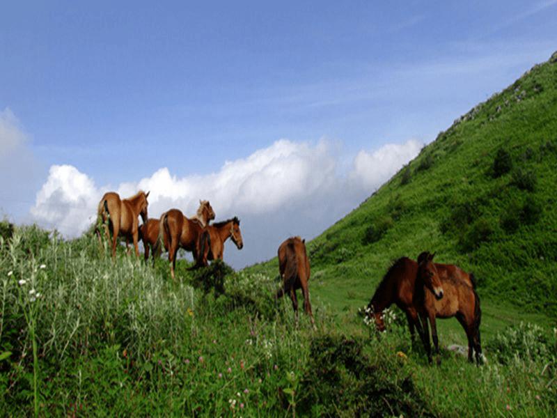 利川齐岳山